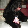 Vánoce 2009  a Aishenčin nejoblíbenější dárek