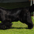 Klubová výstava Kravaře 18.9. 2010