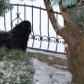 Sníh, sníh, snížek (zima 2010)