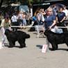 Mezinárodní výstava psů Litoměřice 22.5.2011