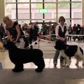 Mezinárodní výstava psů Brno 26. 6.2011