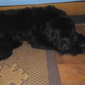 5. týden našeho malého fundláčka a jarní údržba Aishenky / 5 weeks old Ailou and Aisha´s spring-cleaning